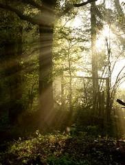 The rays (smcnally24601) Tags: mist river mole surrey britain british england english morning spring betchworth