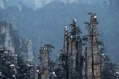 Zhangjiajie National Park (virtualwayfarer) Tags: zhangjiajieshi hunansheng china cn avatar hallelujahmountain zhangjiajie nationalpark nationalforestpark unesco unescoworldheritage worldheritagesite nature wildlife naturephotography dramaticnature landscape dramaticlandscape spires chinese visitchina visithunan hunanprovince incrediblenature lateafternoon cliff cliffs pandora pandoramountains mountains karstformation winter snow snowy naturalwonder republicofchina mistymountains mist 張家界 scenery pillar alexberger virtualwayfarer sonya7rii sonyalpha