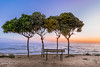 (Stavros A.) Tags: sea seascape tree trees idyllic romantic sunset landscape bench relax relaxation greece ilia ilis zacharo beach coast ionion ipeloponnese nikond750 nikon24120f4 waterfront evening spring