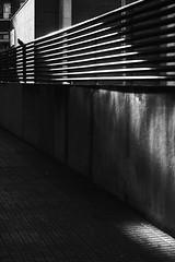 Birding (elgunto) Tags: bird street barcelona light contrast shadows blackwhite monochrome silhouette sonya7 tamron287528 laea4