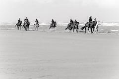 Cavaliers sur la page (Oostduinkerke) (Philippe Clabots (#PhilippeCPhoto)) Tags: philippecphoto cavalier cheval hiver horse mer oostduinkerke philippec plage rider sport