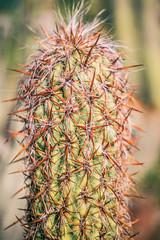 Sometimes a Fantasy (Thomas Hawk) Tags: america california huntington huntingtonbotanicalgarden losangeles sanmarino southerncalifornia thehuntington usa unitedstates unitedstatesofamerica botanicalgarden cactus desertgarden fav10