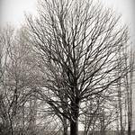 Baum hintern Zaun thumbnail