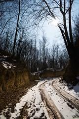 faith (A.Iwańska) Tags: tree snow winter fotest landscape sky road niebo śnieg zima wiosna słońce sun sunshine fx nikon sigma natura nature gloss shine bright jasno kontrast polska poland polishphoto lubelskie spring