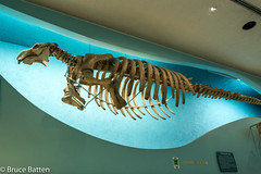 180324 Washington-18.jpg (Bruce Batten) Tags: usa marine museums trips occasions mammals subjects reptiles locations animals vertebrates businessresearchtrips washingtondc dinosaurs washington districtofcolumbia unitedstates us