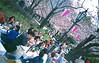 sakura (thomasw.) Tags: sakura tokyo asakusa japan nippon asia asien analog cross crossed agfa expired lomo everydayeverywhere everydayasia 35mm kb
