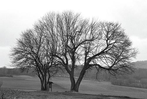 Baum.