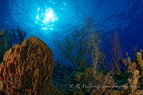 bahamas_2015_rwilpernig