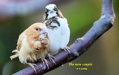WBY6905-16 7D2-70 Birds in company (wbyoungphotos) Tags: birds friends species different close poking pokes wbyoungphotos