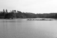low water (verblickt) Tags: lake woodquarter beach forest greyscale springtime barrierelake waterlevel loweraustria ottenstein