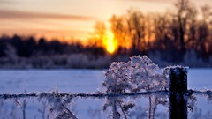 A Chilly start to the day. (Bob's Digital Eye) Tags: april2018 bobsdigitaleye canon canonefs1855mmf3556isll frost h2o hoarefrost laquintaessenza snow snowscene spring sun sunrise t3i flicker flickr winter winterinmn