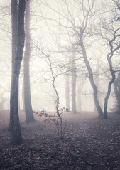 Young & Old (Captain Nikon) Tags: fog foggy woods woodland leicestershire beech jubileewoods atmospheric ethereal moods moody spring weather dreamy england nikon uk greatbritain landscapephotography