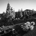 Teide_160514_6222 thumbnail