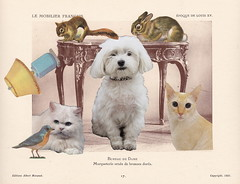 Pet Portrait Pandemonium (Angie Naron) Tags: art collage collagebyangienaron portrait petportrait pandemonium cats dog bird rabbit squirrel lamp epoquedelouisxvbureau