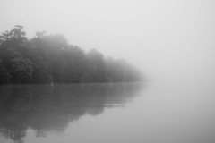 Misty morning on the jungle river (Wanda Amos@Old Bar) Tags: monochrome sabah wandaamos blackandwhite dawn mist river water forest atmosphere kinabatanganriver