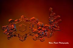 IMG_3241 (nitinpatel2) Tags: snowflakes winter snow macro snowflake crystal nature nitinpatel