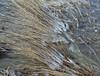 Riet met koude voetjes (Pieter Musterd) Tags: ijs water pietermusterd musterd canon pmusterdziggonl nederland holland nl canon5dmarkii canon5d hoorn ijskoud wijs winter storm haven ijsselmeer