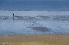 Marée basse sur la côte Normande 08 (letexierpatrick) Tags: maréebase mer marine marée maritime plage sable sea normandie france europe extérieur explore nature nikon nikond7000 eau