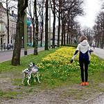 Haagse lente thumbnail