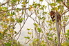 singe preah vihear (Joh Pik) Tags: preahvihear prasatpreahvihear unesco patrimoinemondial patrimoinemondialedelunesco worldheritage thailande cambodge cambodia thai frontière frontier temple ប្រាសាទព្រះវិហារ prasatpreahvihea shiva bouddha buddha shivaïste templedepreahvihear asie culturel cultural templehindou hindutemple dângrêkmountains khmer empirekhmer unescoworldheritagesite suryavarman montsdangrek architecturekhmère