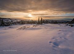 Glen Alps sunset (Traylor Photography) Tags: alaska glennalps landscape sunset nature hillside flattop mountain colors anchorage unitedstates us
