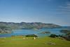 Lone Stump (Jocey K) Tags: newzealand nikond750 southisland akaora bankspeninsular landscape akaoraharbour hills sea sheep sky