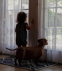 Baby and her dog look out a glass door. (elnina999) Tags: window dog child toddler glassdoor puppy pet animal companion together love tenderness view phone photography pixel google cute childhood