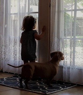 Baby and her dog look out a glass door.