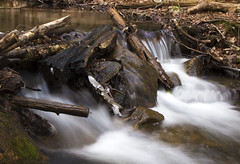 Untitled (claire.nish) Tags: nature outside water tree blue green red cool perspective barn river stream
