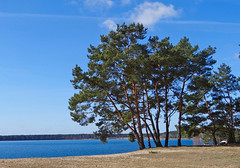 Am Helenesee (bernstrid) Tags: helenesee see wasser strand bäume kiefer ffo frankfurto brandenburg himmel blau wolken