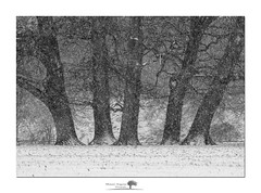 Five (shaun.argent) Tags: trees tree texture woodland woods shaunargent seasons snow winter nature morning mono