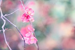 (Elizabeth_211) Tags: pink garden nature closeup flower bokeh