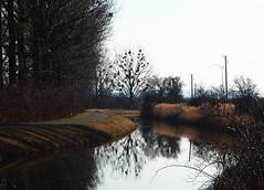 Baden Umgebund (koty3) Tags: kanal drzewa