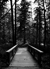 Bridge (mgschiavon) Tags: duke northcarolina blackandwhite bw blackwhite