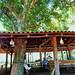 Visit to Água Boa restoration project.