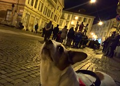Attending (little_frank) Tags: dog holyfriday easter pasqua night light celebration procession background life religion