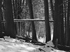 Forest at Winter's End (alsteele) Tags: mamiya m645 sekor 80mm caffenol ilford panf iso50