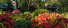 Nezu jinja Azalea Festival (tokyobogue) Tags: tokyo japan nezu nezujinja nezushrine shrine nikon nikond7100 d7100 azalea bunkyoazaleafestival flowers blooms bushes trees dusk sunset evening tamron