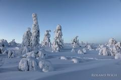 Lapland (Rolandito.) Tags: europa europe finland finnland suomi lappland lapland winter tree trees baum bäume