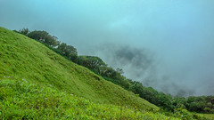 The mist decides to play spoilsport, obscuring the view of the landscapes. (Bhuvan N) Tags: tadiandamol coorg kodagu karnataka landscapes landscape landscapephotography nature naturephotography mist greenery mountains clouds cloudy morning misty westernghats ngc