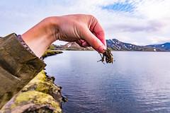 DSC_7477 (jj4925000) Tags: iceland roadtrip kerið geysir gullfoss 公路旅行 冰島 火口湖 瀑布 彩色火山 landmannalaugar