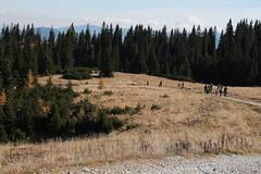 Autumn memories (felilx_silvestris) Tags: mountain alps autumn herbst berge landschaft rax österreich austria