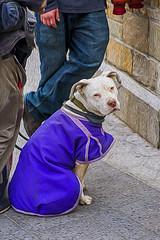 1345_1005FLOP (davidben33) Tags: manhattan newyork unionsquare street streetphoto people portraits women girl guys pets flowers cityscape landscape beauty fashion