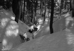 Jeu de lumière (bd168) Tags: snow forest trees woods hiver winter lightandshadows lumièreetombres monochrome blancetnoir blackandwhite olympus 1442mm contrast contraste