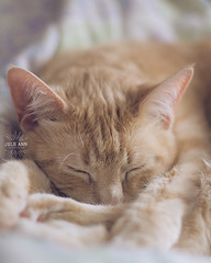 (Julie Ann Photos) Tags: julieannphotos animals cat dog canonrebelt5 breinigsville pennsylvania