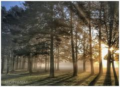 Trees & Sun Rays Birmingham (hussey411) Tags: amateur amateurphotography amateurphotographer photographer photography photo iphonephotography outdoors sunrise sunray sunrays sun trees tree nature birmingham westmidlands uk