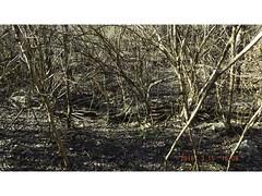 DSCF0909 (kevinredden1) Tags: hikes streambed hidden