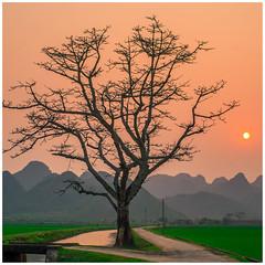 Đường quê (=Heo Ngốc=) Tags: road countryside tree alone sunset sun moutain ricefield green vietnam cây cảnhđẹp