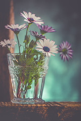 Glass of daisies (Ro Cafe) Tags: stilllife blooms daisies flowers glass wood set up arrangement nikkormicro105f28 nikond600