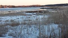 Winter Landscape (Art of MA Foto Stud) Tags: artblackburn marsh reeds ocean buzzardsbay weweantic massachusetts wareham snow ice sunset